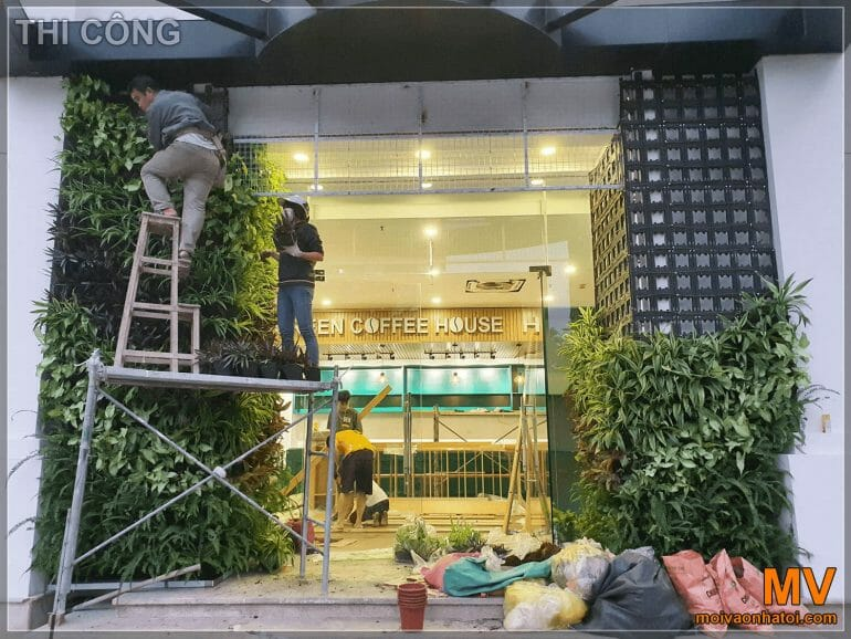 the process of installing a green tree system at the gate of Hanoi coffee shop