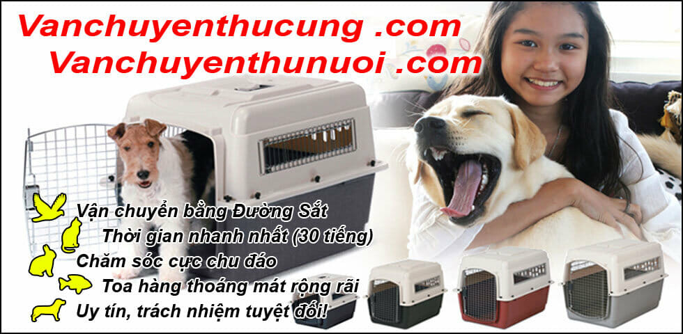 Transporting fast-moving pet dogs and cats Mr Son